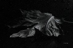 Left Alone (Photography) by Randi Grace Nilsberg This photo consists of two layers; one black and white shot of the leaf and one shot of the hood of a car in rain.  The image is one in a series.