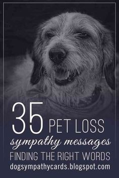 35 pet sympathy messages for loss of dog