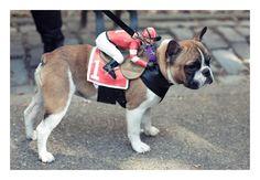 I'm lovin' this dog Halloween costume