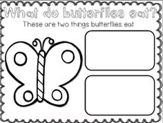 Butterfly Lifecycle {Craftivity and More in English and Spanish}
