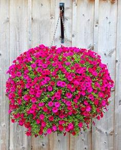 Dont throw those fading basket and container plants away! See how to easily replant hanging baskets for a gorgeous second life in the landscape! Hanging Plants Outdoor, Plants For Hanging Baskets, Hanging Flower Baskets, Outdoor Flowers, Outdoor Planters, Flower Planters, Hanging Planters, Hanging Gardens, Fall Planters