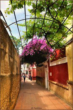 """La calle del Agua es una de las más típicas de Sevilla. Empieza cerca de los jardines Murillo y se termina en el pasaje de la Judería ; su trazado transcurre lo largo de los muros del Alcázar. Se llama así debido a que corriendo a lo largo un acueducto que abasteció de agua al Alcázar. En la espesor del muro al comienzo de la vía, se ve el tubo de agua. - The """"calle del Agua"""" is one of the most typical of Seville. Start near the Murillo gardens and ends in the passage of Jewry, i..."""