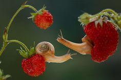 Il prend des photos magiques des plus petites créatures de la nature