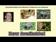 The RedFoot Tortoise - Helping educate current and potential owners of Redfoot tortoises on their husbandry, so they can have a healthy, active tortoise and the tortoise can express its normal behavior and live a long, healthy life. Tortoise Care, Tortoises, Pet Care, Healthy Life, Pets, Hd Video, Terrarium, Behavior, Environment