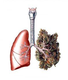 Un estudio apunta que fumar marihuana ocasionalmente no perjudica las funciones pulmonares - http://growlandia.com/marihuana/un-estudio-apunta-que-fumar-marihuana-ocasionalmente-no-perjudica-las-funciones-pulmonares/