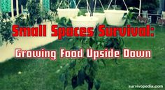 By Theresa Crouse – SurvivoPedia One of the most basic supplies that you'll need in the event that SHTF is food, but living in an apartment or small area can make it tough to grow your own. Y…