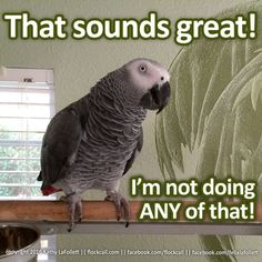 That sounds great! I'm not doing ANY of that! ....yep, life with parrots