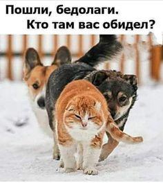 Идеи на тему «Кошки, собачки.» (270) в 2021 г | собачки, кошки, смешные  котята