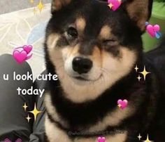 Image may contain text - Wholesome Memes Memes Humor, Funny Memes, Cute Love Memes, Funny Cute, Love You Memes, Cute Animal Memes, Cute Animals, Flirty Memes, Crush Memes