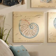 Sea Snail Shell Canvas Art Print