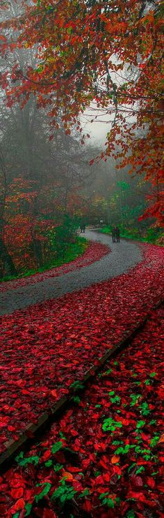 nice Red Autum in the Road to Bolu Fall Pictures, Pretty Pictures, Beautiful World, Beautiful Places, The Road, Fotografia Macro, Belleza Natural, Belle Photo, Beautiful Landscapes