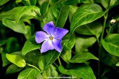Fotografía de una Flor - Patanes de Arriba