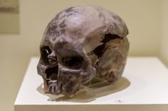 "Ancient skulls of early settlers in North America baffle scientists: ""We still have a lot to learn"" Early Settler, Dna Genealogy, Still Have, Prehistoric, Scientists, Archaeology, Skulls, North America, History"