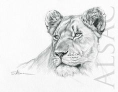 Lioness Portrait Illustration by Stéphane Alsac - Wildlife Artist Original drawing of Lioness. Black & white ink realistic Illustration signed by Stéphane Alsac - Wildlife Artist. See the other original drawings of wild animals. Animal Sketches, Animal Drawings, Female Lion Tattoo, Animal Print Background, Lion Tattoo Sleeves, Lion Sketch, Lioness Tattoo, Graphite Art, Lion Drawing