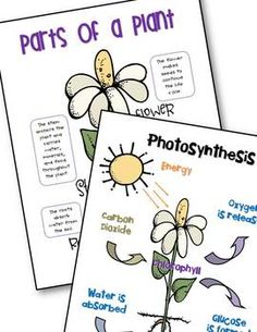 LOTS of creative and fun ideas for getting kids writing about science while teaching about the life cycle of plants. Post includes FREE printable anchor charts for photosynthesis and parts of a plant. 1st Grade Science, Kindergarten Science, Elementary Science, Science Classroom, Teaching Science, Science For Kids, Classroom Resources, Classroom Ideas, Teaching Ideas