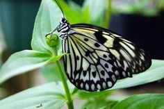 Butterfly Closeup Free Stock Photo
