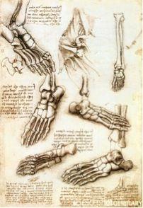 """Estudio del pie, Leonardo Da Vinci """"El pie humano es una obra de arte y de ingeniería"""""""