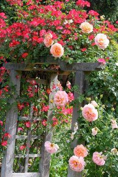 .rustic rose arbor