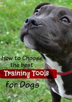 Choosing the right tools when dog training is important for success! Check out what we think is best! via @KaufmannsPuppy