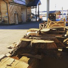 For recreational purposes, there is no better material than wood. Workshop, Cat, Instagram, Table, Furniture, Home Decor, Timber Wood, Atelier, Decoration Home