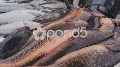 Pescaderia on the seashore - Stock Footage | by BucleFilms