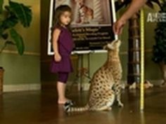 "WTF- World's Largest Domestic Cat ✮✮""Feel free to share on Pinterest"" ♥ღ www.myvintagecameras.com"