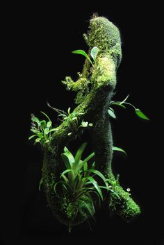 EpiWeb branch by Mikaels orchids Frog Terrarium, Aquarium Terrarium, Planted Aquarium, Vivarium, Bonsai, Mini Orquideas, Moss Plant, Miniature Orchids, Aquarium Design