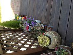이도의 현관 입구에 일광욕하러 나온 꽃들