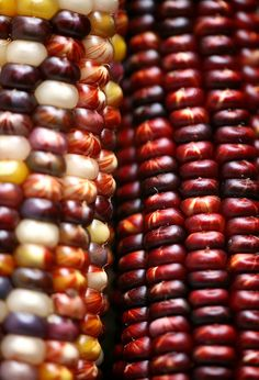 Indian Corn | earth tones | autumn | fall