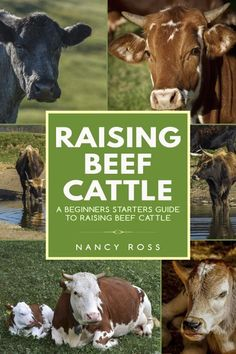 Buy Raising Beef Cattle: A Beginner's Starters Guide to Raising Beef Cattle by Nancy Ross and Read this Book on Kobo's Free Apps. Discover Kobo's Vast Collection of Ebooks and Audiobooks Today - Over 4 Million Titles! Cattle Farming, Pig Farming, Livestock, Cattle Barn, Beef Cattle, Cattle Ranch, Cattle Dogs, Raising Cattle, Raising Farm Animals
