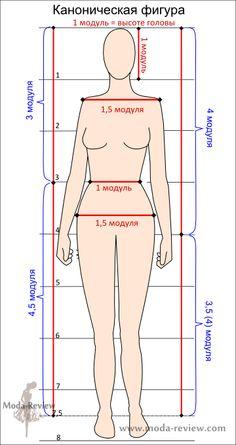 Мера измерения пропорции — модуль. В случае с фигурой человека это высота головы. Напомним, высота женской фигуры — 7,5 модулей. Так как высота головы в среднем около 22 — 23 см, значит и рост такой фигуры от 165 до 173 см.