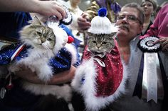 Saintly City Cat Championship 2014 Photos