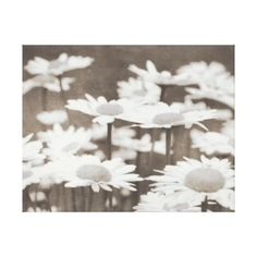 Daisies Flowers Sepia Wrapped Canvas - black gifts unique cool diy customize personalize