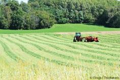 Washington State agriculture officials are now testing alfalfa for possible GMO contamination after a farmer's hay was rejected for export. http://articles.mercola.com/sites/articles/archive/2013/09/24/gmo-alfalfa.aspx