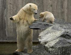 animais mamãe e filhotes