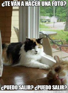 Jajaja chistes de gatos graciosos