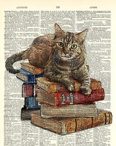 Cat on book stack. Kitty Classics Print looks like an ink drawing with color. - Cat on book stack. Kitty Classics Print looks like an ink drawing with color. Art print on dictiona - Book Art, Book Page Art, Cycle Drawing, Cat Drawing, Drawing Tips, I Love Cats, Crazy Cats, Illustration Book, Curious Cat