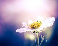 Bildresultat för lilac photography