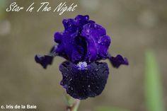 Iris ib star in the night