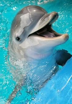 Smile like a DOLPHIN