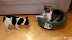 This is just too cute ! #puppy #cat