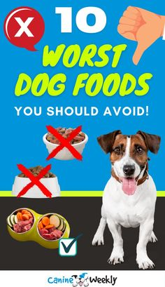 While we would like to think that dog foods companies have the best interest when it comes to our dog's life, the sad reality is that most of the foods on the market have bad ingredients. In this guide, we'll explain which dog food ingredients are harmful for your dog and reveal which dog food brands you should avoid.