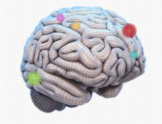 "An Interactive Map Of The Brain | Time to play ""name that cortex."""