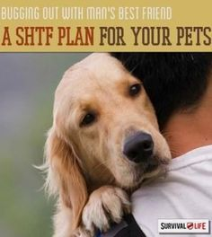 A SHTF Plan For Your Pets | Bugging Out With Man's Best Friend - Survival Life | Preppers | Survival Gear | Blog