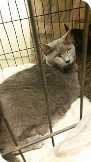 Philadelphia, PA - Domestic Shorthair. Meet Mystiq, a cat for adoption. http://www.adoptapet.com/pet/18532105-philadelphia-pennsylvania-cat