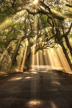 Gorgeous!!! Sunrays on a country path.