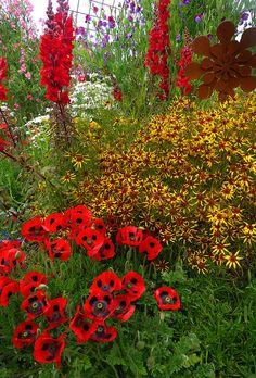 RED AND YELLOW;  Papaver commutatum & Coreopsis ' Tiger Stripes'
