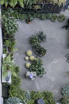 ferm LIVING pop up shop in the iconic Bremerholm 6 power station - Hannah Trickett Hanging Plants, Indoor Plants, Pop Up, Asparagus Fern, Interior Garden, Passion Flower, Garden Spaces, House Plants, Outdoor Gardens