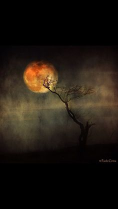 Some nights are just made for feeling creepy.really creepy. by Paolo Cirmia Nocturne, The Dark Side, Some Nights, Moon Pictures, Moon Magic, Beautiful Moon, Halloween Art, Samhain, Stars And Moon