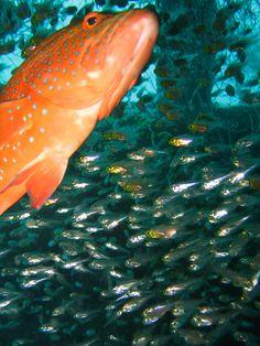 farmer fish